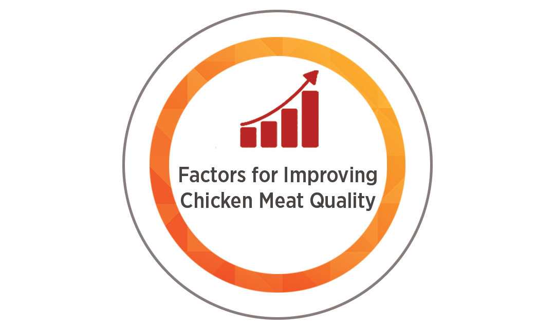 How to Improve Chicken Meat Quality in Slaughter Process